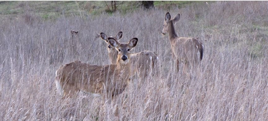 Time running out for hunters with Kansas venison package
