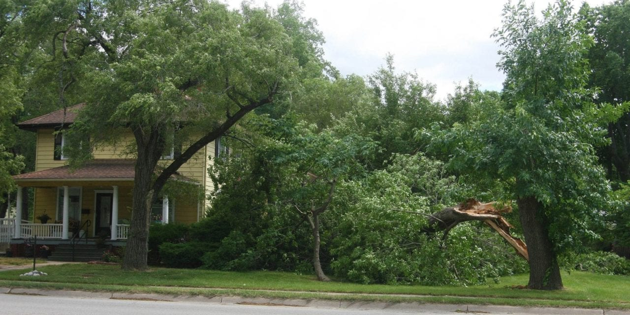 Storm damage to trees around town